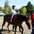 przedszkole-opoczno-konskie-akademia-przedszkolaka168
